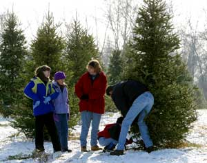 Christmas Tree Cut Your Own