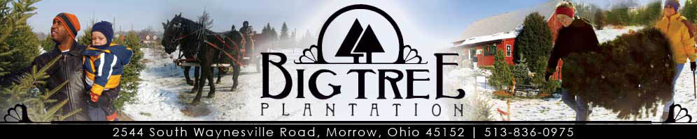 Big Tree Plantation Christmas Trees and Landscape Trees, Morrow, Ohio, Northeast of Cincinnati