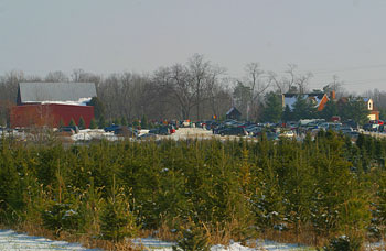 Start Your Own Family Tradition When You Pick Your Own Christmas Trees At  Big Tree Plantation