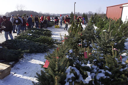 choosing the perfect christmas tree at big tree plantion in morrow ohio is a family - Sales On Christmas Trees